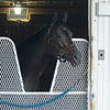 Caption: in her stall after eating<br /> Midnight Bisou at Keeneland on May 2, 2020 Keeneland in Lexington, KY.