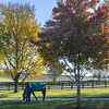 Tiz the Law out for a graze at Keeneland Race Course Tuesday Nov. 3 2020 in Lexington, KY.  Photo by Skip Dickstein