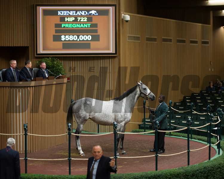 Hip 722 Bryan's Jewel in foal to Speightstown from Bedouin Bloodstock brings $580,000 from Jane Winegardner and M/M Wayne Sweezey.<br /> Keeneland November Sales on Nov. 10, 2016, in Lexington, Ky.