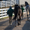 walking horses to the sales pavilion<br /> Keeneland January Sales at Keeneland near Lexington, Ky., on Jan. 14, 2021.