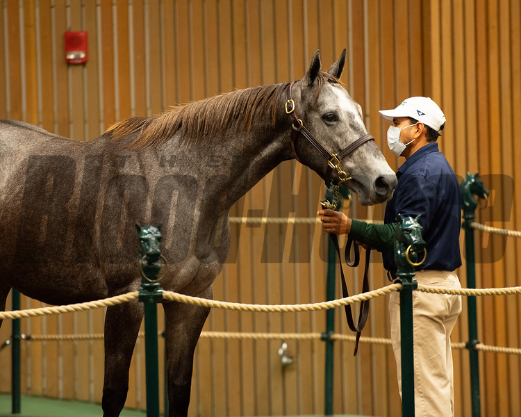 Hip 630 Free Cover from South Point Sales<br /> Sales horses at the Keeneland November Sale at Keeneland in Lexington, Ky. on November 11, 2020.