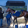Classier gets a bath after her morning gallop at Keeneland Race Course Wednesday Nov. 4 2020 in Lexington, KY.  Photo by Skip Dickstein