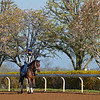 Caption: horse training with rider <br /> Behind the Scenes at Keeneland during Covid19 virus and the people, horses, and essentials needed to take care of race horses on April 2, 2020 Keeneland in Lexington, KY.