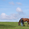 Caption: Horse grazing in Rice Road barn area<br /> Behind the Scenes at Keeneland during Covid19 virus and the people, horses, and essentials needed to take care of race horses on April 2, 2020 Keeneland in Lexington, KY.