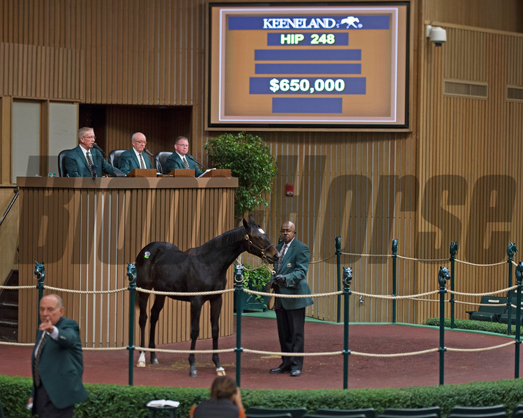 Hips 248 and 251 weanlings<br /> Keeneland November Sales on Nov. 9, 2016, in Lexington, Ky. <br /> Hip 248 War Front filly<br /> Hip 251 Scat Daddy filly
