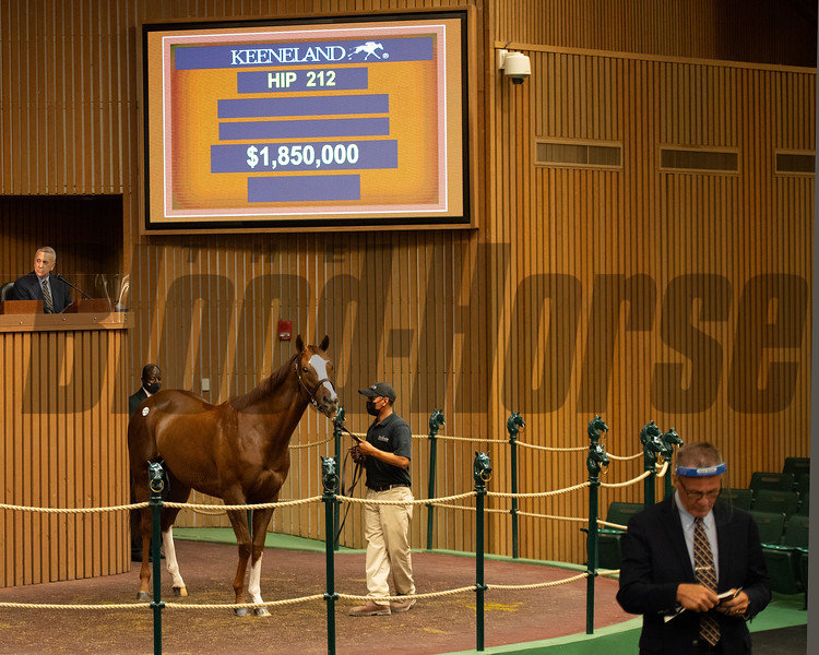Hip 212 Cherokee Maiden<br /> Sales horses at the Keeneland November Sale at Keeneland in Lexington, Ky. on November 9, 2020.