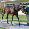 Tonalist<br /> James B. Keogh, plus Lane's End stallions and Keeneland ring<br /> Keeneland November Sales on Nov. 11, 2016, in Lexington, Ky.