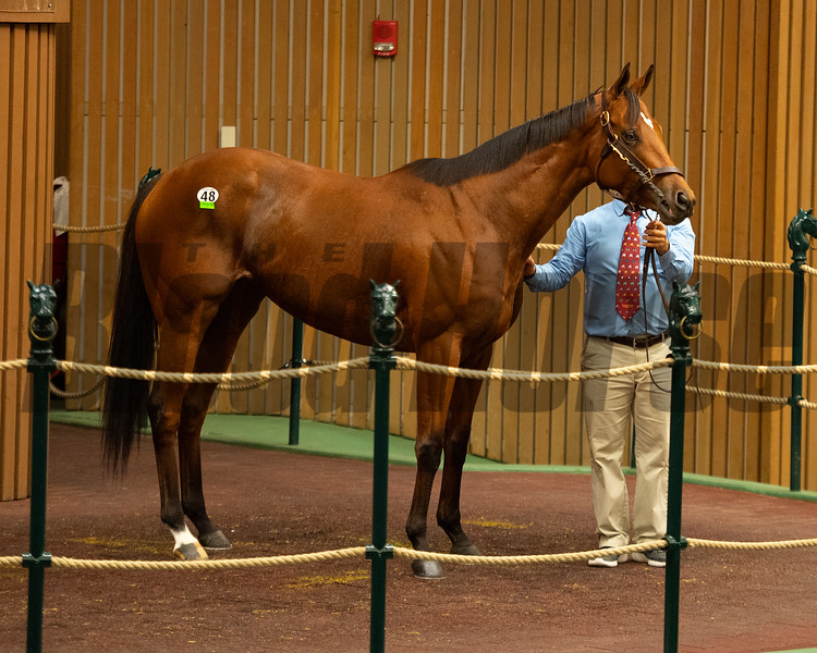 Hip 48 Lady Prancealot from Taylor Made<br /> Sales horses at the Keeneland November Sale at Keeneland in Lexington, Ky. on November 9, 2020.