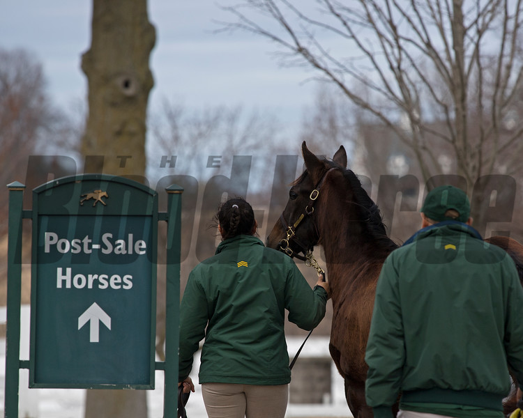 Scene at Keeneland January sales on Thursday, Jan. 11, 2018, in Lexington, Ky.