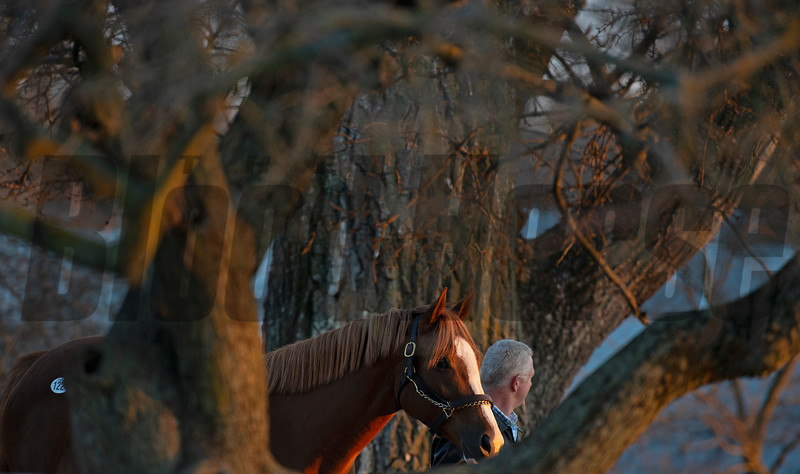 handler walks a horse home to sales barn<br /> Keeneland January Sales at Keeneland near Lexington, Ky., on Jan. 14, 2021.