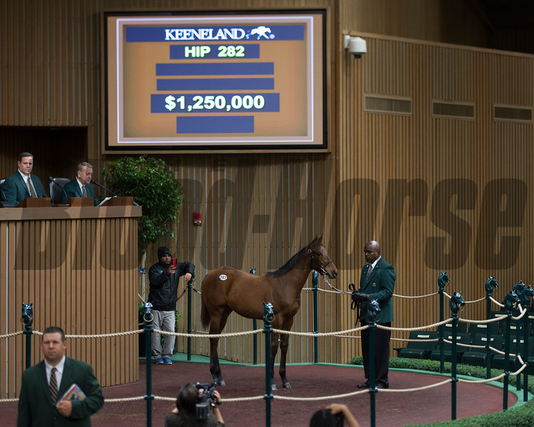hip 282 filly by War Front from Hill n Dale. RNA at $1.25 million