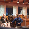 Hip 795D Enaya Alrabb from Paramount Sales<br /> Keeneland January Horses of all ages sales on<br /> Jan. 14, 2020 Keeneland in Lexington, KY.