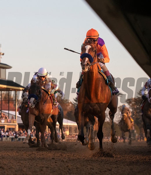 Authentic with jockey John Velazquez wins the $6M Breeders' Cup Classic G1 at Keeneland Race Course Saturday Nov. 7,  2020 in Lexington, KY.  Photo by Skip Dickstein