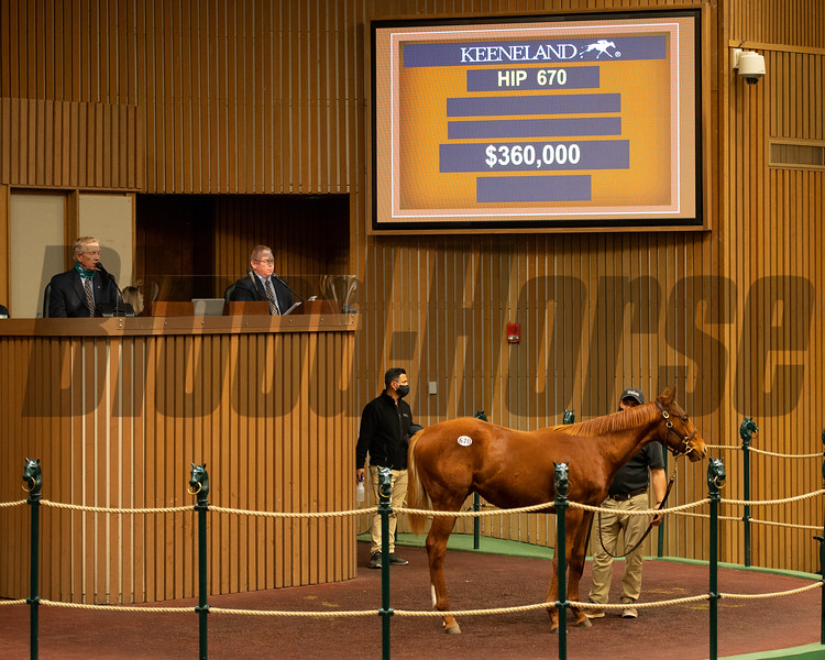 Hip 670 colt by Good Magic out of Inlovewithlove from Bedouin Bloodstock<br /> Sales horses at the Keeneland November Sale at Keeneland in Lexington, Ky. on November 11, 2020.