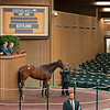 Hip 496 Tis Breathtaking from Eaton.<br /> Keeneland January Horses of all ages sales on<br /> Jan. 14, 2020 Keeneland in Lexington, KY.