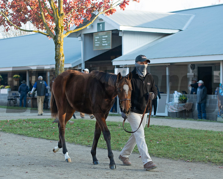 Hip 1707 weanling by Good Magic out of Block<br /> Sales horses at the Keeneland November Sale at Keeneland in Lexington, Ky. on November 12, 2020.