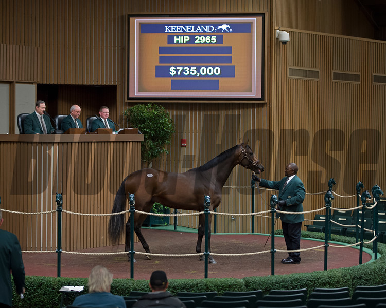 Hip2950 brings $735,000 from Rockingham Ranch<br /> Keeneland November Sales on Nov. 15, 2016, in Lexington, Ky.