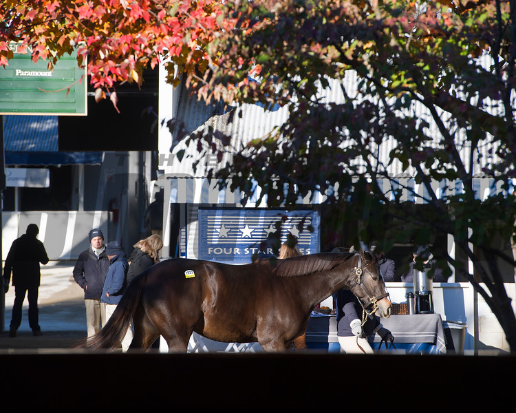 scene<br /> Keeneland November Sales on Nov. 13, 2016, in Lexington, Ky.