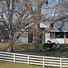 horse returns to barn<br /> Keeneland January Sales at Keeneland near Lexington, Ky., on Jan. 14, 2021.