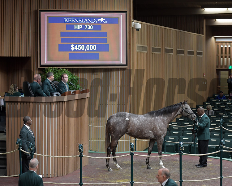 Banree from Eaton Sales sells to Andre Lynch at Keeneland January.