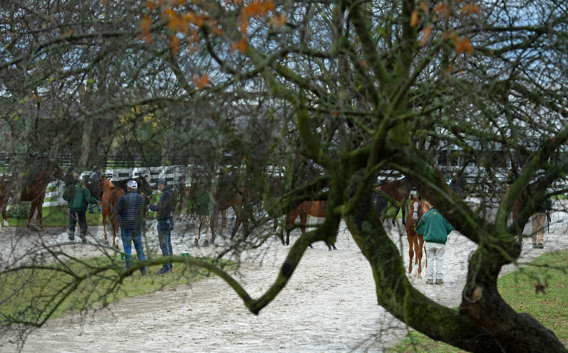 scene at Lane's End<br /> Sales horses at the Keeneland November Sale at Keeneland in Lexington, Ky. on November 10, 2020.