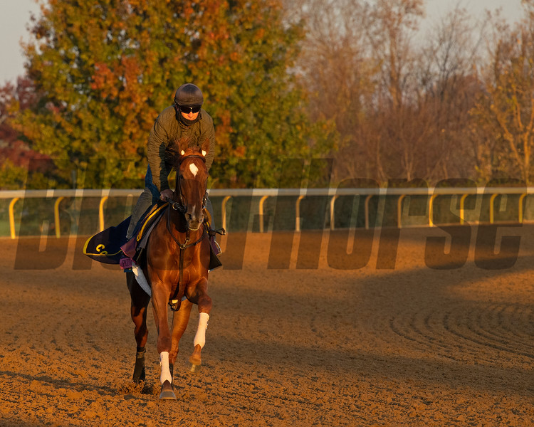 Plum Ali<br /> Breeders' Cup horses at Keeneland in Lexington, Ky. on November 5, 2020.