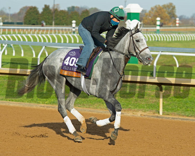 Harvey's Lil Goil<br /> Breeders' Cup horses at Keeneland in Lexington, Ky. on November 5, 2020.