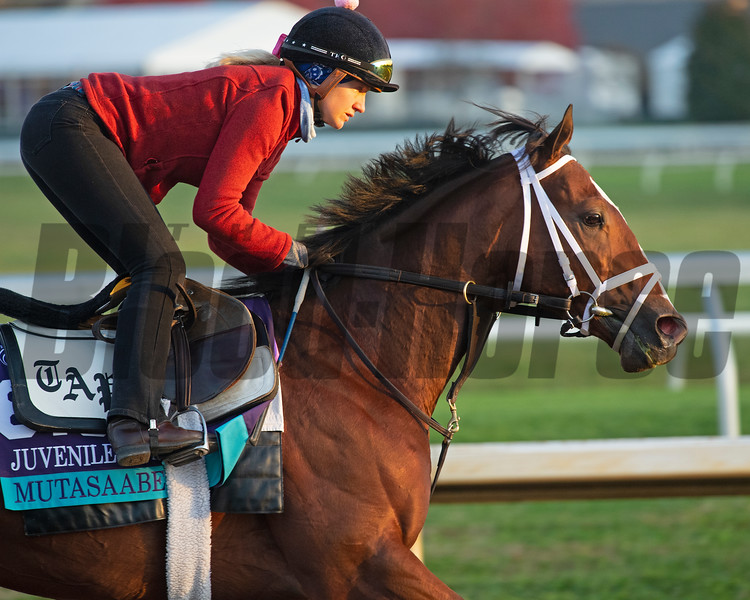 Mutasaabeq<br /> Breeders' Cup horses at Keeneland in Lexington, Ky. on November 5, 2020.