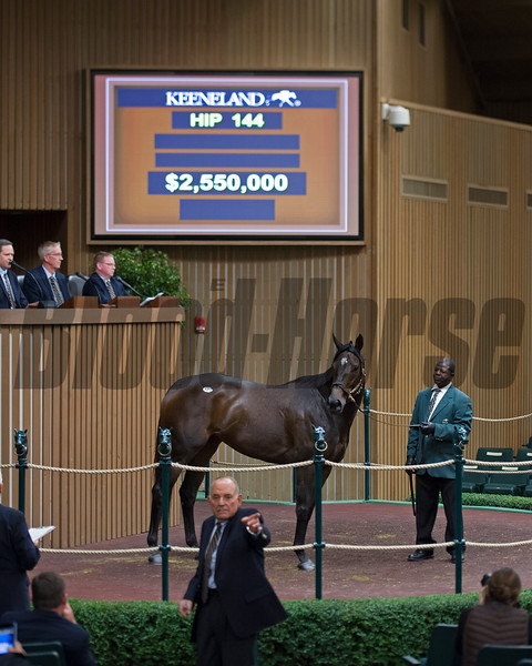Hip 144 Celestine from Taylor Made brings $2.55million from Fiona Craig for Moyglare<br /> Keeneland November Sales on Nov. 8, 2016, in Lexington, Ky.