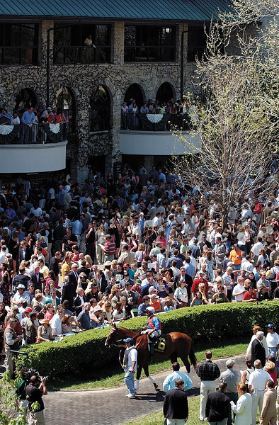 Horse leaves paddock at Keeneland on April 19, 2003.<br /> LandscapeScenesOrigs2 image 28<br /> Photo by Anne M. Eberhardt
