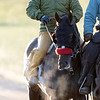 Below freezing temps did not keep horses from their morning exercise at Keeneland Race Course Monday Nov. 2 2020 in Lexington, KY.  Photo by Skip Dickstein
