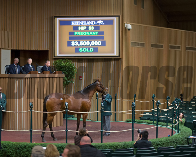 Hip 53 Secret Gesture brings $3.5M from Hunter Valley Farm and bought by John Ferguson with Darley<br /> Keeneland November Sales on Nov. 8, 2016, in Lexington, Ky.