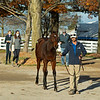 Hip 836 colt by Bolt d'Oro out of Stormbeforethecalm at Summerfield<br /> Sales horses at the Keeneland November Sale at Keeneland in Lexington, Ky. on November 10, 2020.