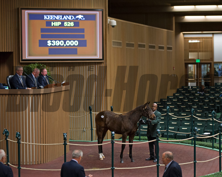 Hip 526 filly by Speightstown from Nikkis Smartypants and Bedouin Bloodstock bought for 390,000 by John Moynihan<br /> Keeneland November Sales on Nov. 10, 2016, in Lexington, Ky.