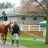 Hip 1226 Tapped Twice<br /> Sales horses at the Keeneland November Sale at Keeneland in Lexington, Ky. on November 10, 2020.