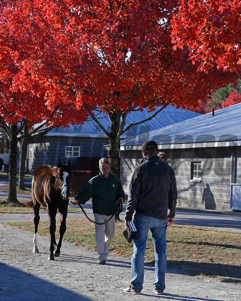 Vanning. Horses leaving another Keeneland November sales.<br /> Keeneland November Sales on Nov. 18, 2016, in Lexington, Ky.