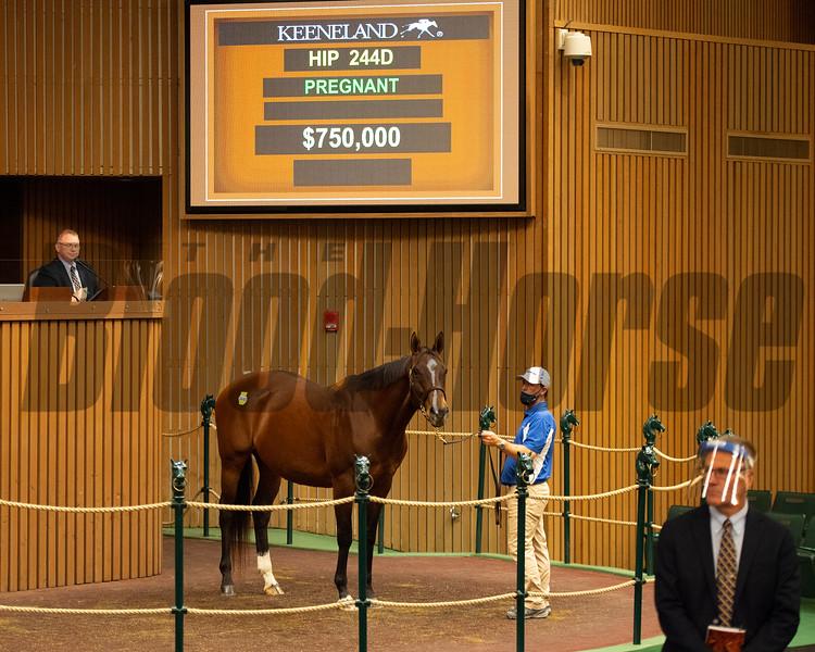Hip 244D Veronique<br /> Sales horses at the Keeneland November Sale at Keeneland in Lexington, Ky. on November 9, 2020.