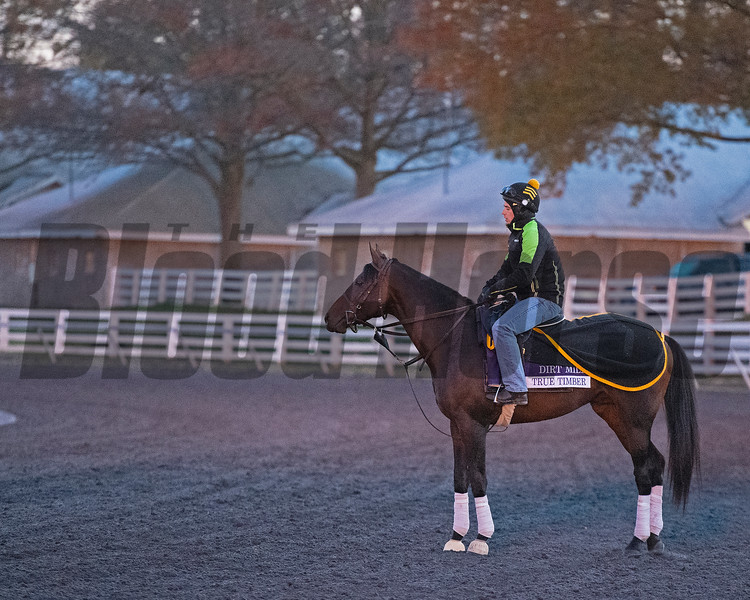 True Timber at Keeneland in Lexington, Ky. on November 2, 2020. Photo: Anne M. Eberhardt