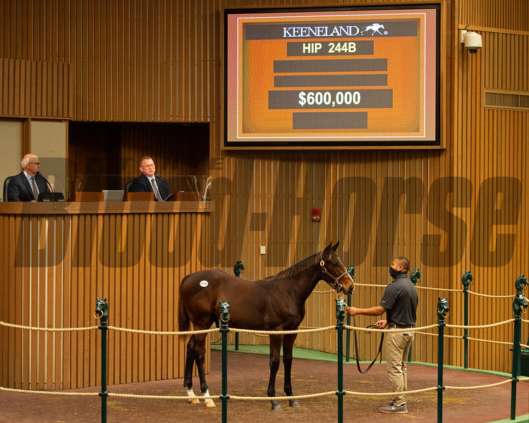 Hip 244B colt by  American Pharoah out of Unicorn Girl<br /> Sales horses at the Keeneland November Sale at Keeneland in Lexington, Ky. on November 9, 2020.