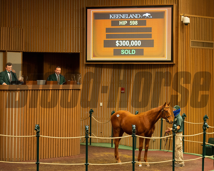 Hip 598 colt by Gun Runner out of Divine Escapade from James B. Keogh/Grovendale<br /> Sales horses at the Keeneland November Sale at Keeneland in Lexington, Ky. on November 10, 2020.