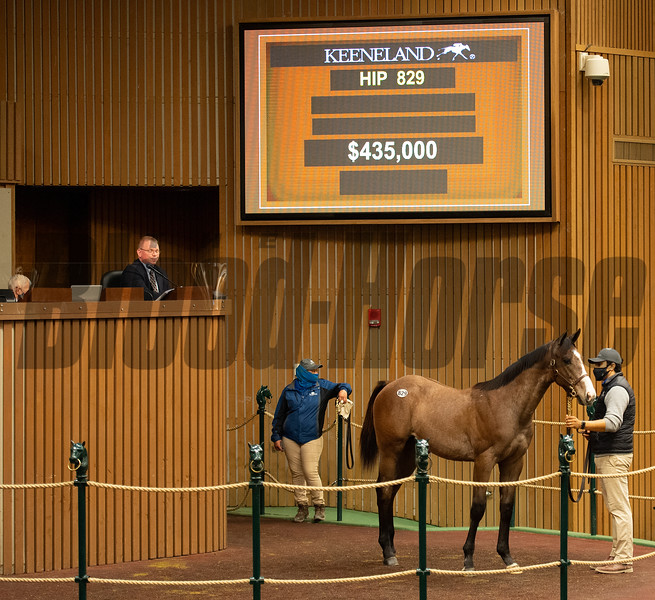 Hip 829 colt by Justify out of Stayclassysandiego from Elm Tree<br /> Sales horses at the Keeneland November Sale at Keeneland in Lexington, Ky. on November 11, 2020.