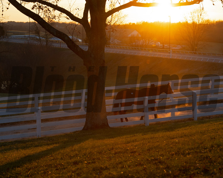 horse walking. back to barn at sunset<br /> Keeneland January Sales at Keeneland near Lexington, Ky., on Jan. 14, 2021.