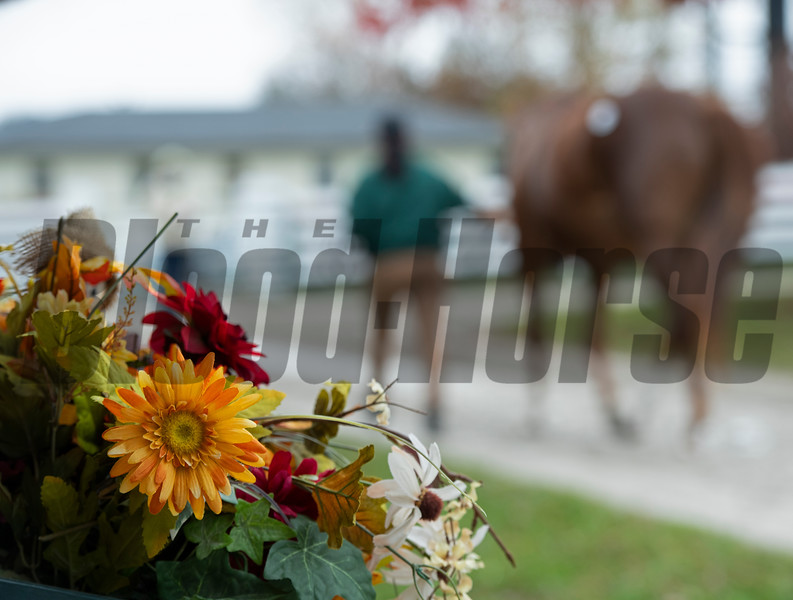 scene<br /> Sales horses at the Keeneland November Sale at Keeneland in Lexington, Ky. on November 10, 2020.
