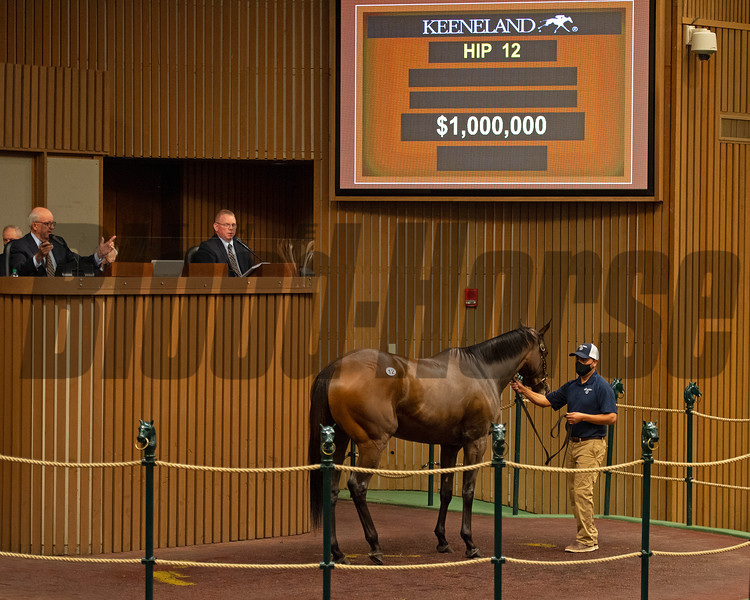 Hip 12 Gingham from Brookdale Sales, agent<br /> Sales horses at the Keeneland November Sale at Keeneland in Lexington, Ky. on November 9, 2020.