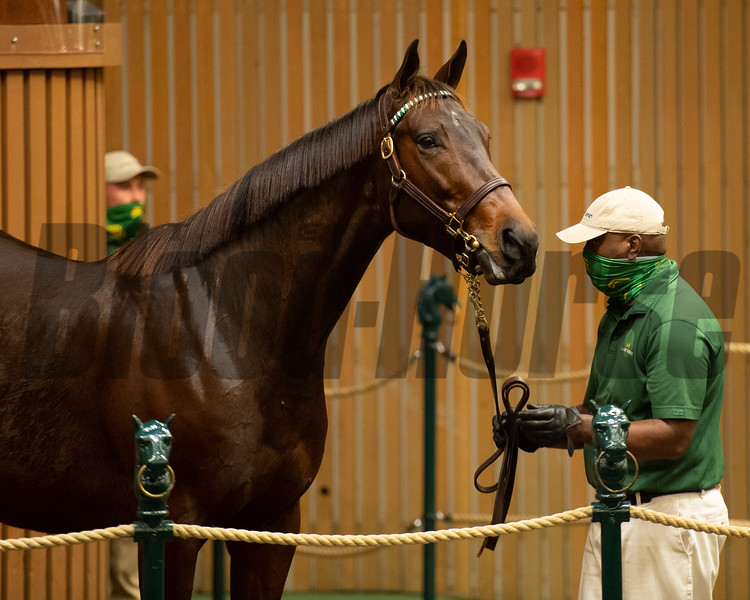 Hip 465 Style and Grace<br /> Sales horses at the Keeneland November Sale at Keeneland in Lexington, Ky. on November 10, 2020.