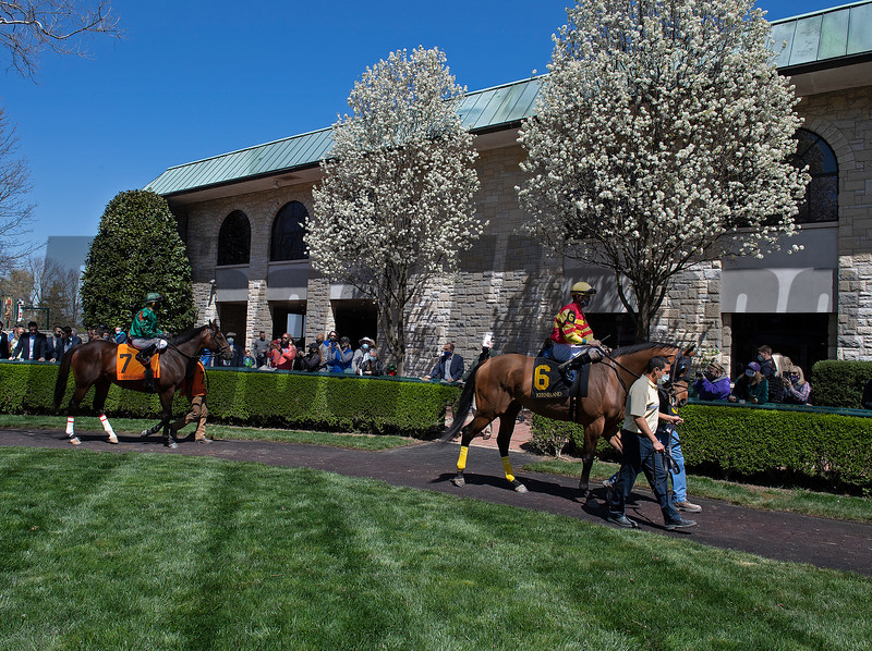 Scenes: (L-r): King's Mischief and Gun Lap walk in the paddock prior to Race. 3.<br /> at Keeneland near Lexington, Ky., on April 3, 2021.