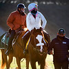 Tiz the Law with exercise rider Heather Smullen returns from a morning gallop with trainer Barclay bringing up the rear on his horse at Keeneland Race Course Monday Nov. 2 2020 in Lexington, KY.  Photo by Skip Dickstein