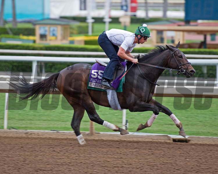 Carina Mia<br /> Works at Santa Anita in preparation for 2016 Breeders' Cup on Oct. 30, 2016, in Arcadia, CA.