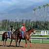 Caption:  Flying Tipat with Tammy Fox for Romans<br /> Scenes at Santa Anita in preparation for Breeders' Cup  in California on Oct. 27, 2014.<br /> 1Origs10_27_14 image994<br /> Photo by Anne M. Eberhardt
