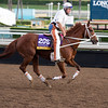 I'm a Chatterbox<br /> Works at Santa Anita in preparation for 2016 Breeders' Cup on Nov. 1, 2016, in Arcadia, CA.